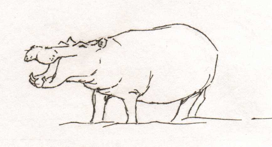 Line drawing of Hippo by Sophie Neville