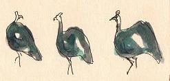 Three guniea fowl by Sophie Neville