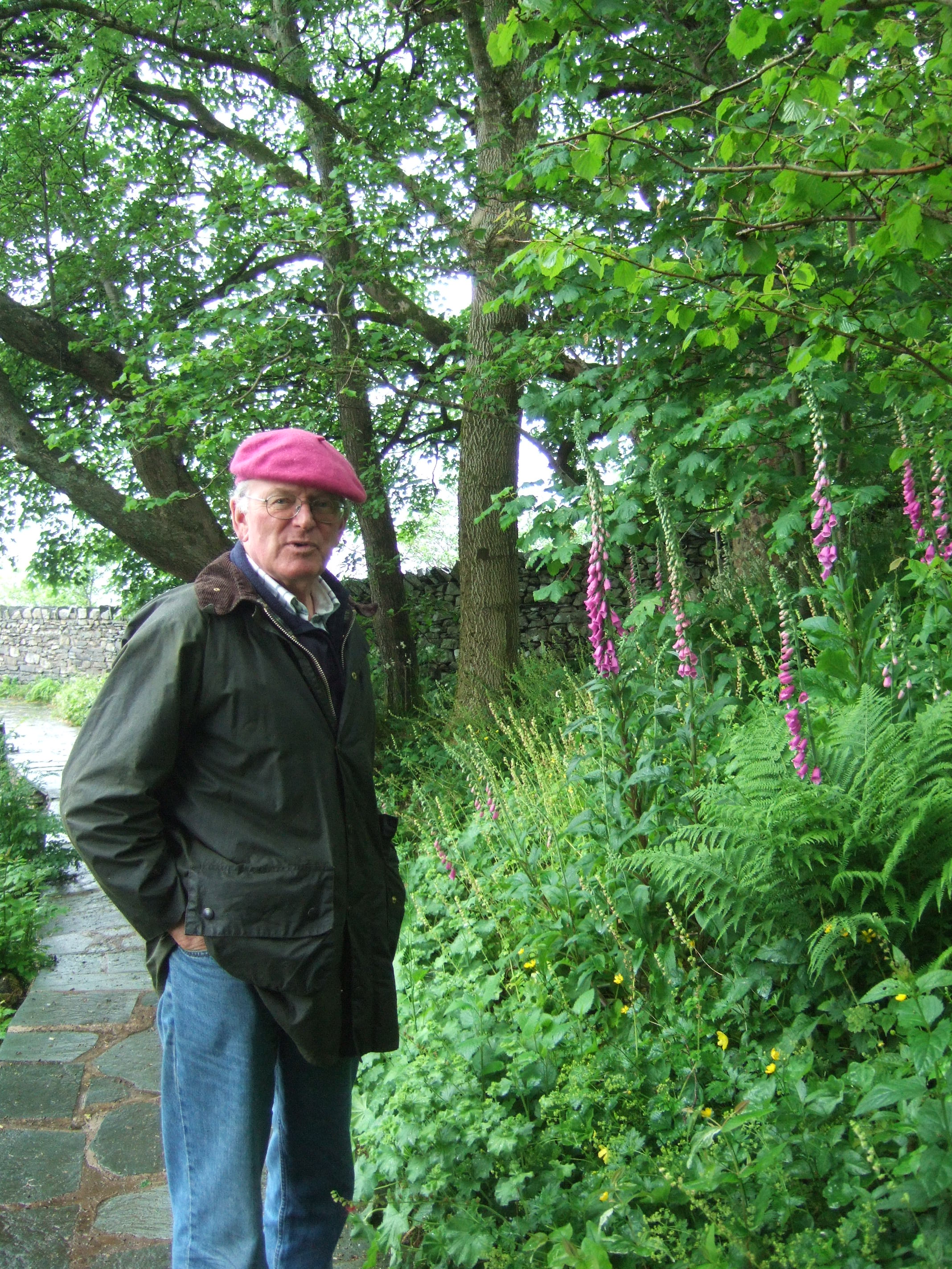 Foxgloves in the Lake District