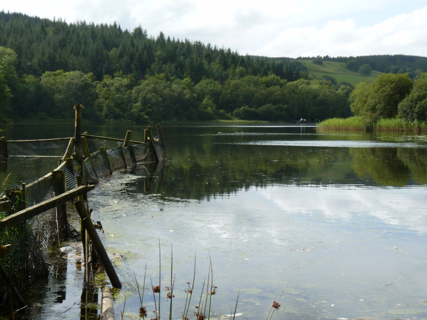 Esthwaite Water photo: Peter Walker