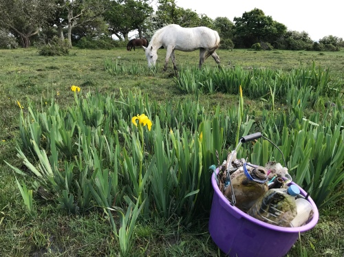 Rubbish - white pony with litter