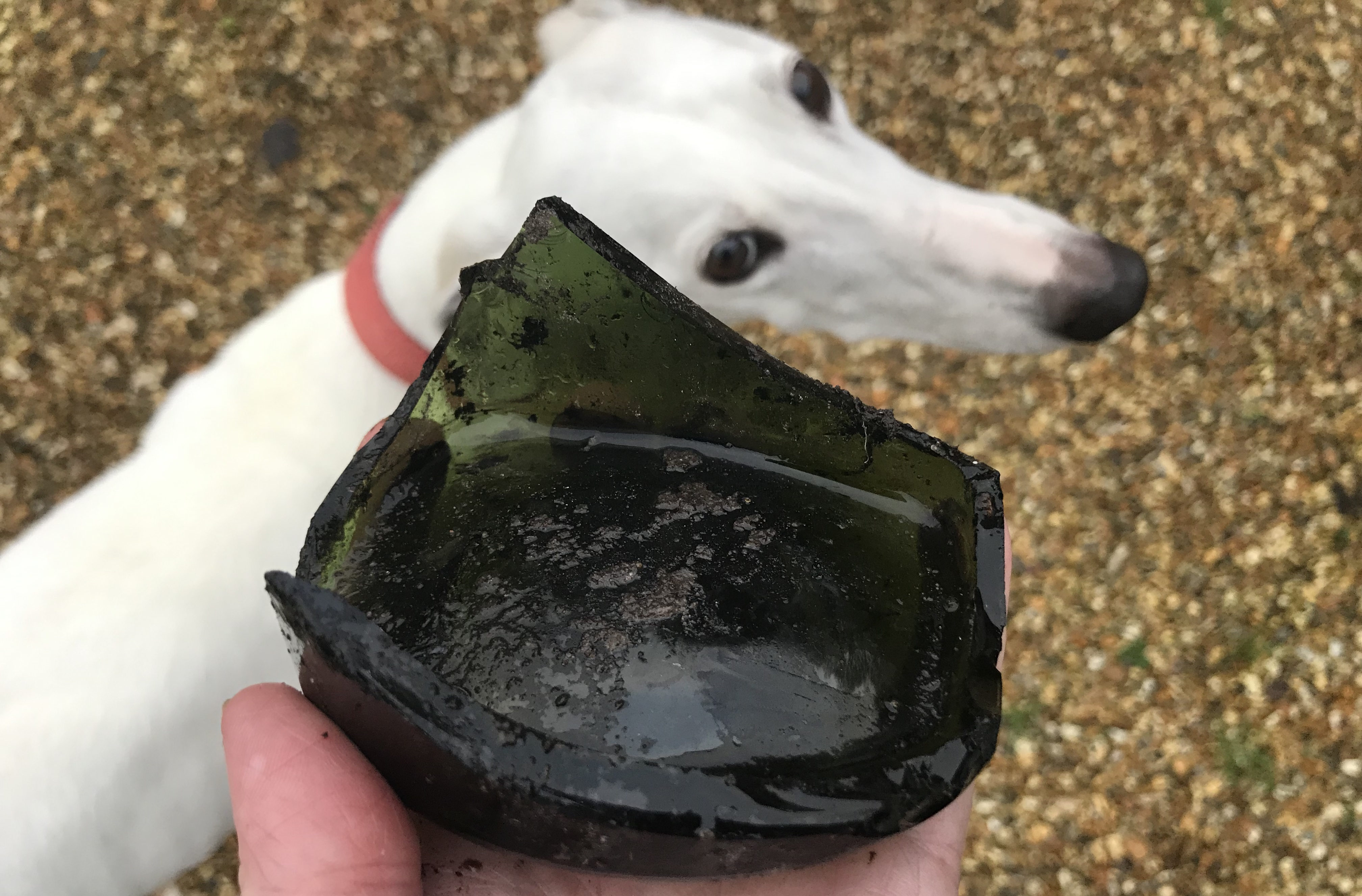 Rubbish glass with dog