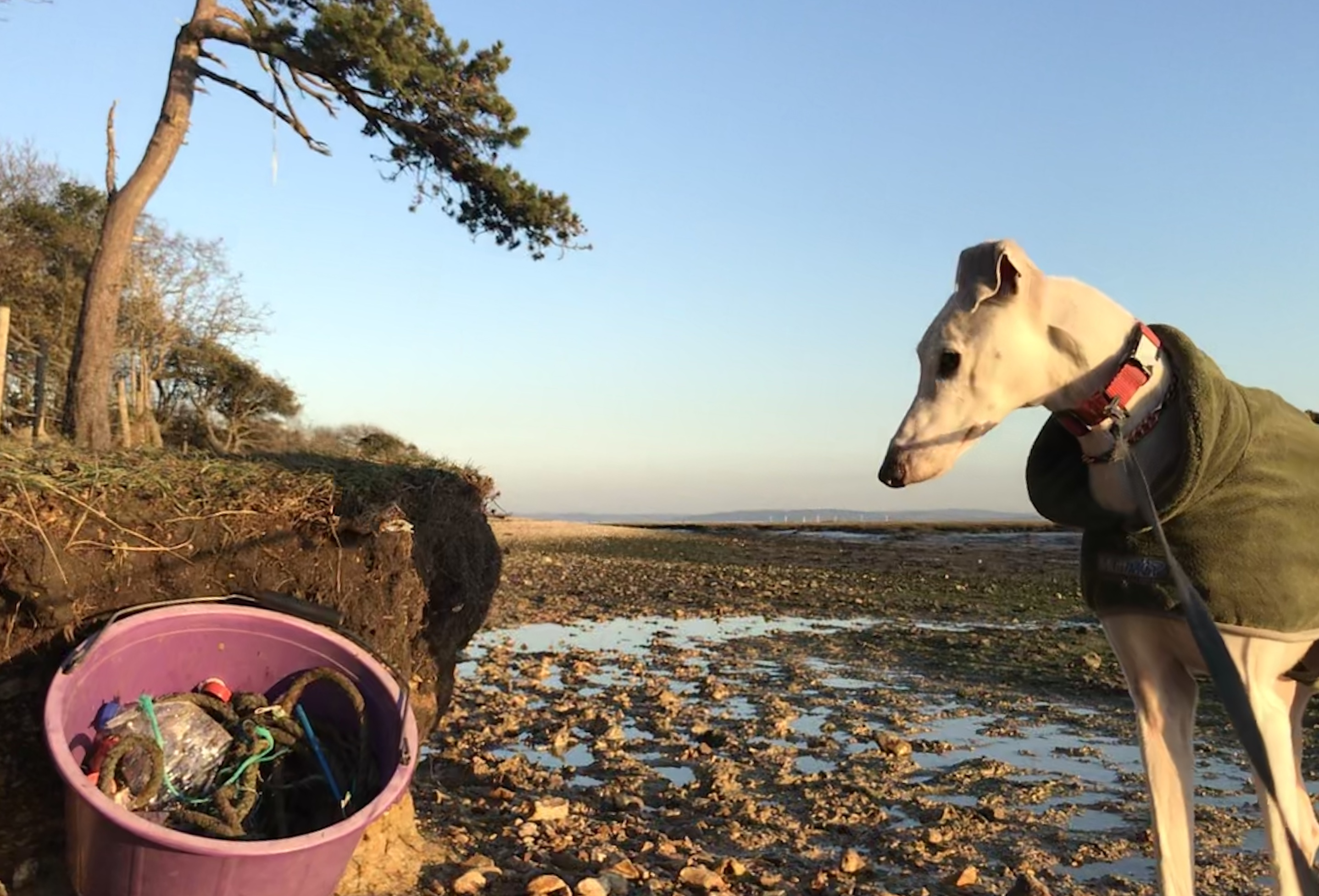 Rubbish - Solent beach clean Jan 2020